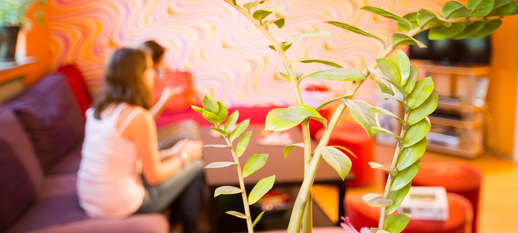 Jugendliche sitzen im Zimmer, im Fokus ist eine Pflanze